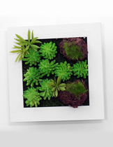 Succulent plants wall hanging